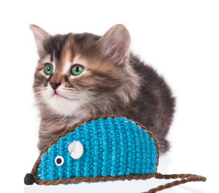 Cute siberian kitten with  toy mouse isolated on white background. Focus on the kitten photo
