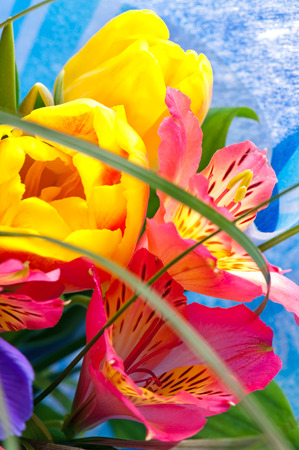 Bright bouquet with yellow tulips and mauve irises photo