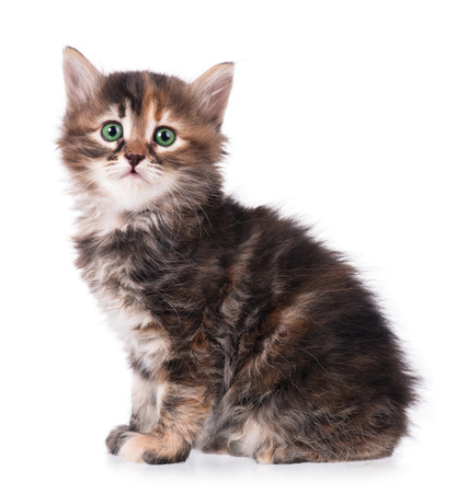 Cute fluffy little kitten isolated on a white background cutout Stock Photo