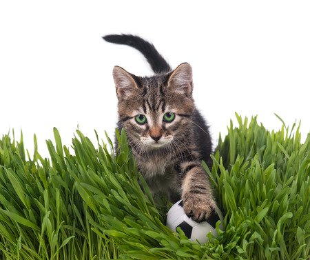 Cute kitten with football ball on the green grass over white background photo