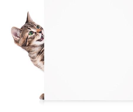 흰색 배경에 빈 빌보드와 귀여운 작은 새끼 고양이
