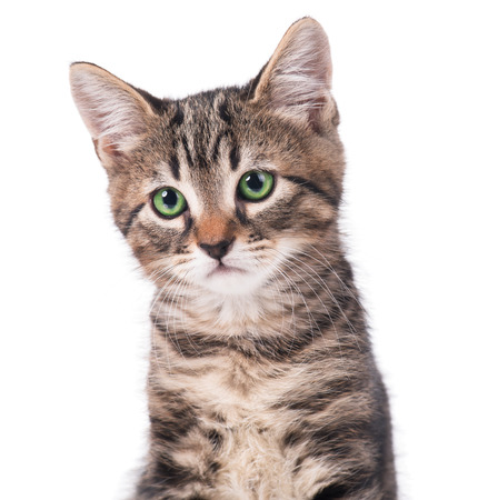 interested baby: Portrait of cute kitten over white background close-up