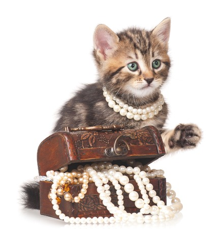 Fashionable kitten protects a wooden chest with pearls isolated on white  Stock Photo