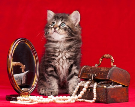 fancy sweet box: Cute kitten and a chest with pearls near the mirror over red  Stock Photo
