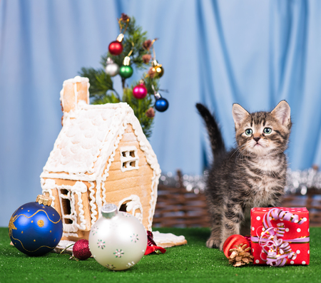 christmas pussy: Cute kitten near gingerbread lodge with Christmas gifts and toys over blue background