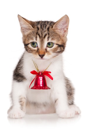 handbell: Cute kitten with hand-bell isolated on white background