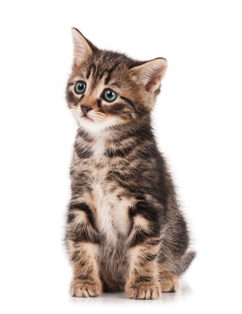 self harm: Cute little kitten isolated on a white background cutout Stock Photo