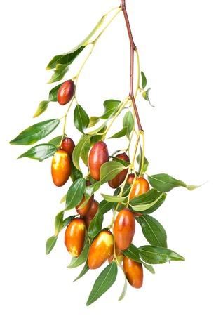 나뭇잎과 나뭇 가지에 신선한 대추 과일 흰색 배경에 고립