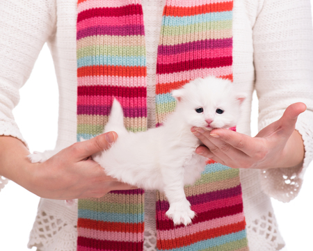 intriguing: Cute little kitten on a womans hands over white background