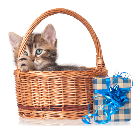 christmas pussy: Cute little kitten with gift-box in the wicker basket over white background