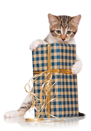 unexpectedness: Cute kitten with gift box isolated on white background