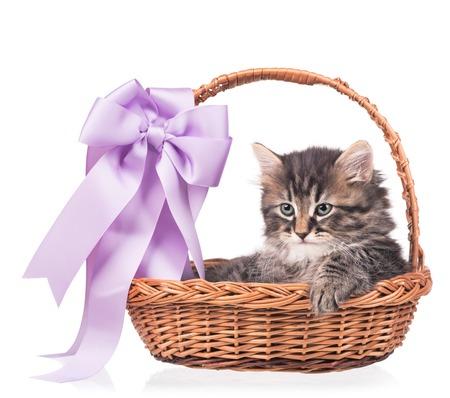 shape cub: Cute siberian kitten in a wicker basket isolated on white background