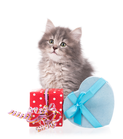 shape cub: Cute fluffy kitten with gift box isolated over white background Stock Photo