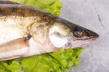 pikeperch: Fresh pike perch on the green lettuce leaves over table-top background
