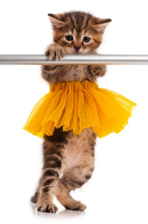 barre: Cute little kitten dressed in the tutu posing near ballet barre over white background