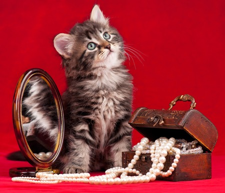 fancy sweet box: Cute kitten and a chest with pearls near the mirror over red background