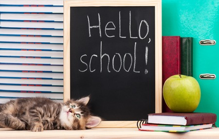 Cute little  kitten with school accessories is ready to go to school Stock Photo