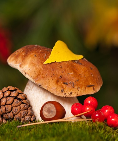 turba: Beautiful cepe on a green moss. Focus on the mushrooms cap Foto de archivo