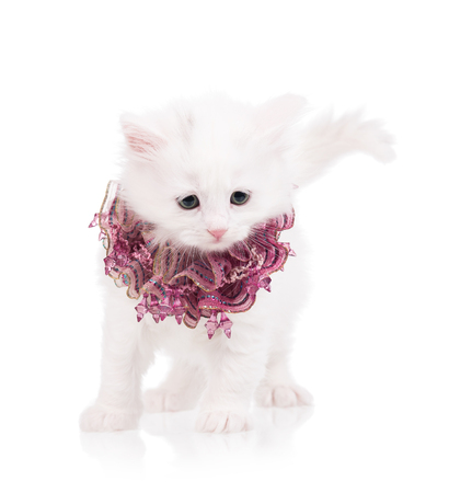 Cute fluffy kitten isolated over white background close-up