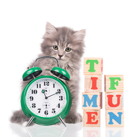 fun background: Cute fluffy kitten with alarm clock ready for fun isolated over white background