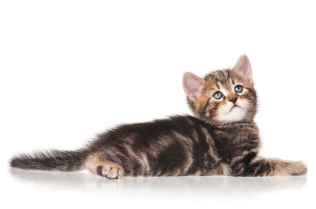 unfortunate: Serious little kitten isolated on white background cutout