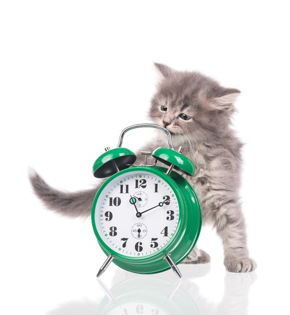 intriguing: Cute fluffy kitten with alarm clock isolated over white background