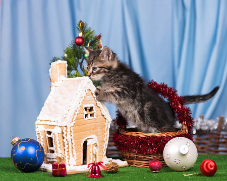 lodge: Cute kitten near gingerbread lodge with Christmas gifts and toys over blue background