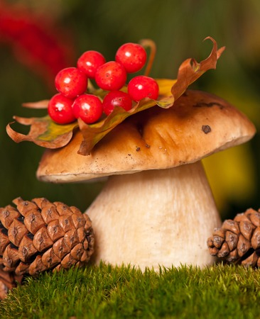 showpiece: Wild edible cepe on a green moss over forest background