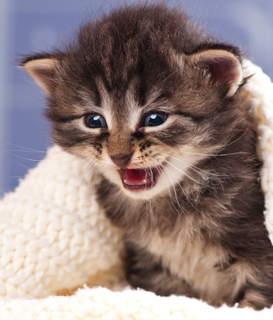 Crying cute kitten in a warm knitted sweater over light blue background Stock Photo