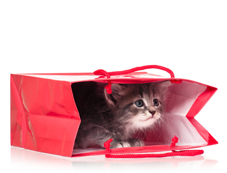 interested baby: Cute little kitten in a gift bag isolated on white background Stock Photo