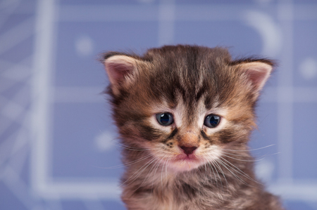 Sad cute kitten over light blue background