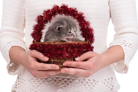 Cute fluffy kitten in the decorated wicker basket in female hands over white background