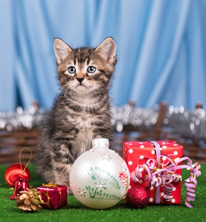 christmas pussy: Cute little kitten with Christmas gifts over blue background