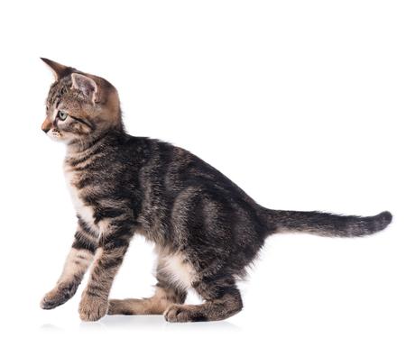 Cute little kitten isolated over white background
