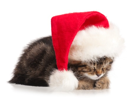 christmas pussy: Cute kitten with red Santa Claus hat isolated on white background