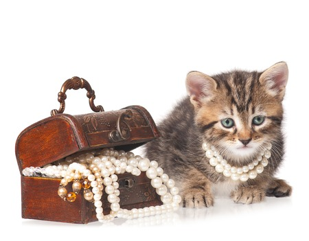 protects: Fashionable kitten protects a wooden chest with pearls isolated on white background