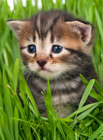 Cute little kitten in the bright green grass over white background Stock Photo