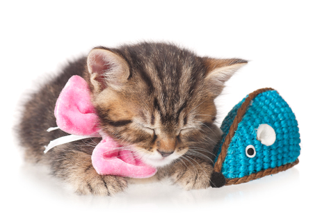 Cute little kitten with toy mouse isolated on white background Stock Photo