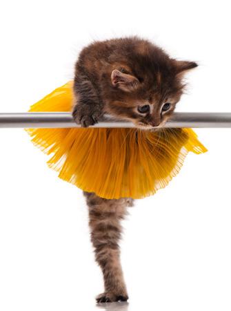 Cute little kitten dressed in the tutu posing near ballet barre over white background