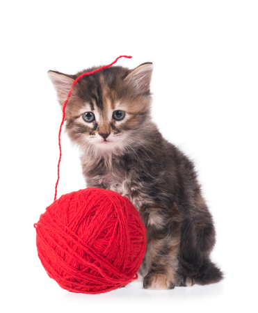 hilo rojo: Cute little kitten with ball of red threads on white background