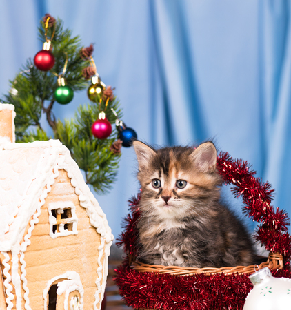 Cute kitten near gingerbread lodge with Christmas gifts and toys over blue background Reklamní fotografie - 87837995