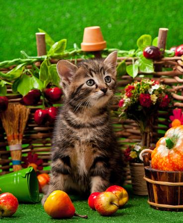 Cute little kitten near decorative wattle fence over the bright grass background