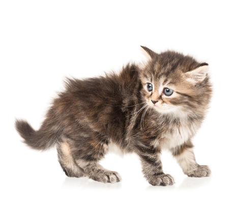 Scared cute little kitten isolated over white background Stock Photo
