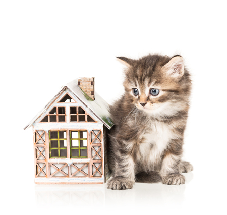 Cute little kitten with toy house isolated over white background