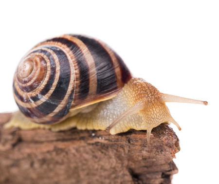 Bright cute snail on the old stub isolated over white background