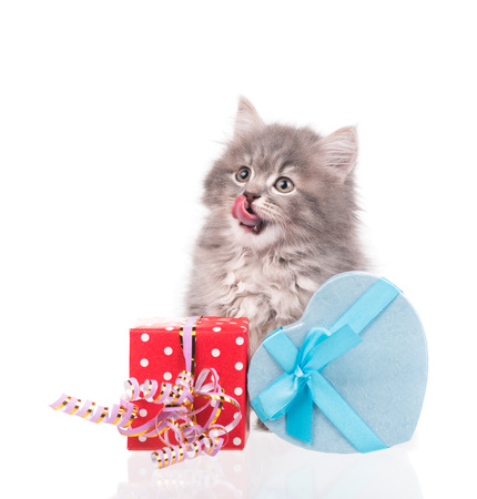 Cute fluffy kitten with gift box isolated over white background Stock Photo