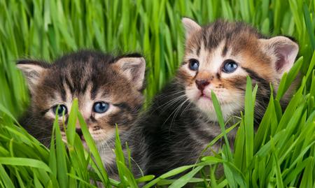 Cute little kittens over e bright green grass background