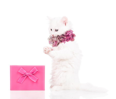 Cute fluffy kitten with gift box isolated over white background Imagens