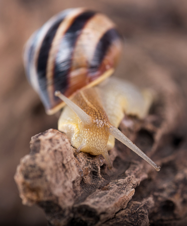 Bright cute snail over the old stub background close-up