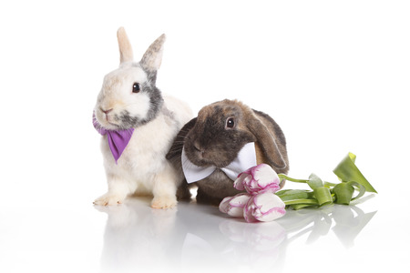 Hare wedding with colorful tulips photo